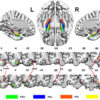 The new subregion in parahippocampal region founded integrated the two memory-related brain networks