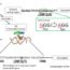 β-Carotene requirement for anti-aging depends on genetic background