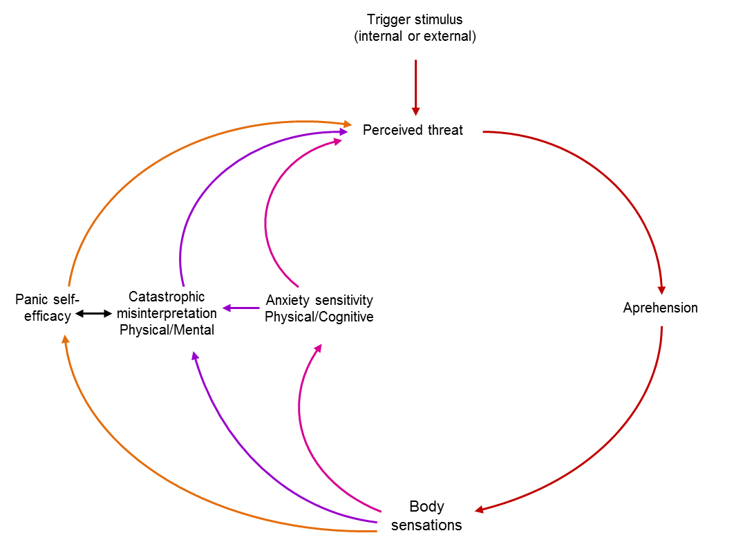 the cognitive model The idea of information processing was adopted by cognitive psychologists as a model of how  social learning theory biology + cognitive psychology .