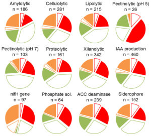 Fig. 2. Distribution of isolates that tested positive for enzymatic activity assays and plant growth promotion traits. Tests performed include enzymatic activity (amylolytic, cellulolytic, lipolytic, pectinolytic (at pH 5.0 and 7.0), proteolytic and xylanolytic) and growth promotion traits (ACC deaminase, IAA production, presence of nifH gene, ability to solubilize phosphate, and siderophore production). Sites C (green), E (orange) and B (red); stems and leaves (empty slices) and roots (full slices).