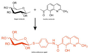 Fig. 1. Combination of a non-active molecule and simple sugar results in a highly active anticancer substance.