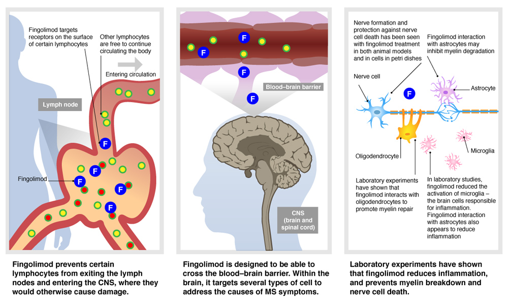 the causes manifestations and effects of inflammation to the brain and central nervous system The central nervous system (cns) is made up of the brain and spinal cord it  functions as the  drugs differ in their potential to cause nerve damage drugs  most.