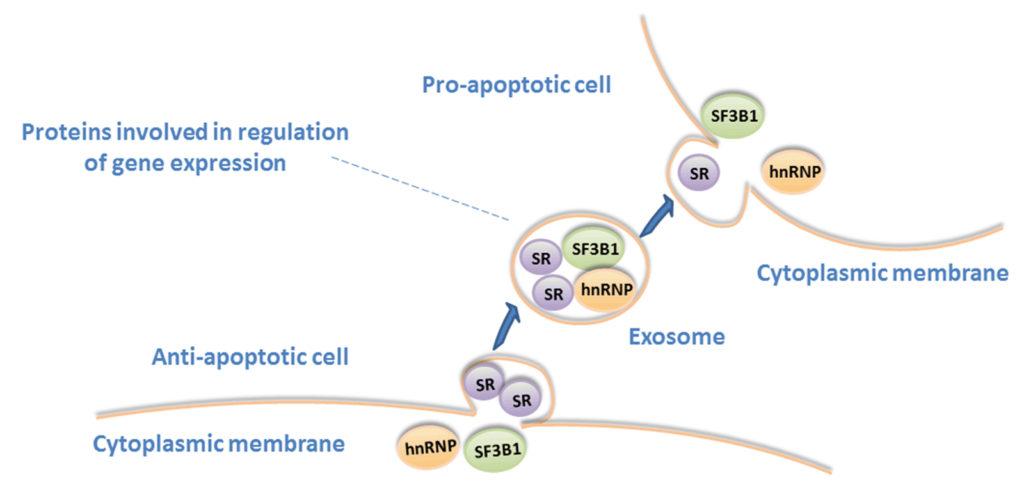 leukemia cells