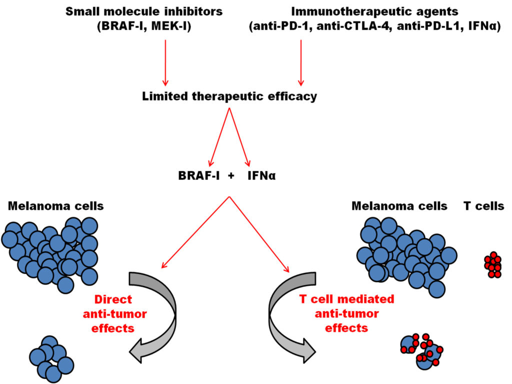 the treatment of BRAF mutant melanoma cells.