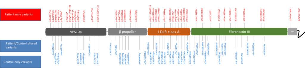 Rare genetic variants identified in the SORL1 gene