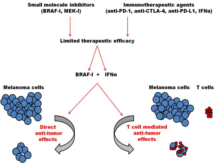 BRAF inhibitor and interferon alpha combination for melanoma treatment