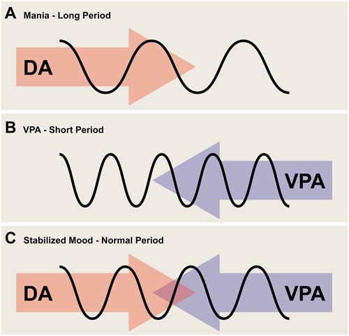 The mood stabilizer valproic acid tunes up abnormal circadian rhythms in mania
