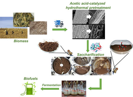 Bioethanol production from corn waste following an optimized hydrothermal pretreatment process