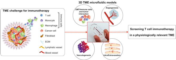 Microfluidic tumor models help pre-clinical screening of T cell cancer immunotherapies