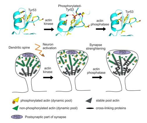 A new dimension to molecular mechanisms underlying learning