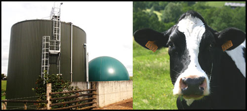 How sustainable is British biogas?