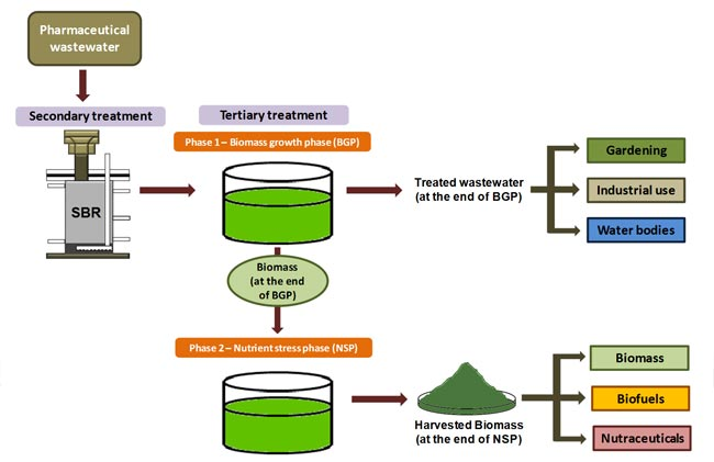 Microalgae – a potential biocatalyst for waste remediation with value Addition