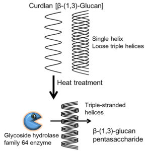 Schematic of oligosaccharides production from curdlan.