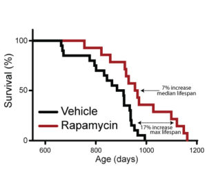 Fig. 1. Intermittent administration of rapamycin extends lifespan. Survival curve of female mice administered rapamycin or vehicle every 5 days.