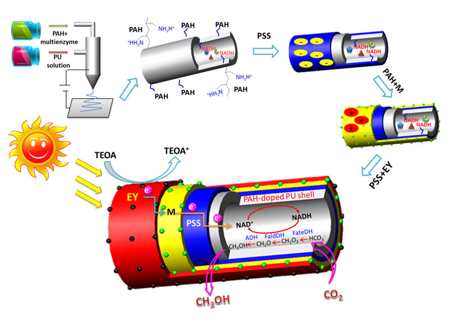 Illustration of the preparation of integrated biocatalyzed artificial photosynthesis system for solar-energy driven conversion of CO2 to methanol