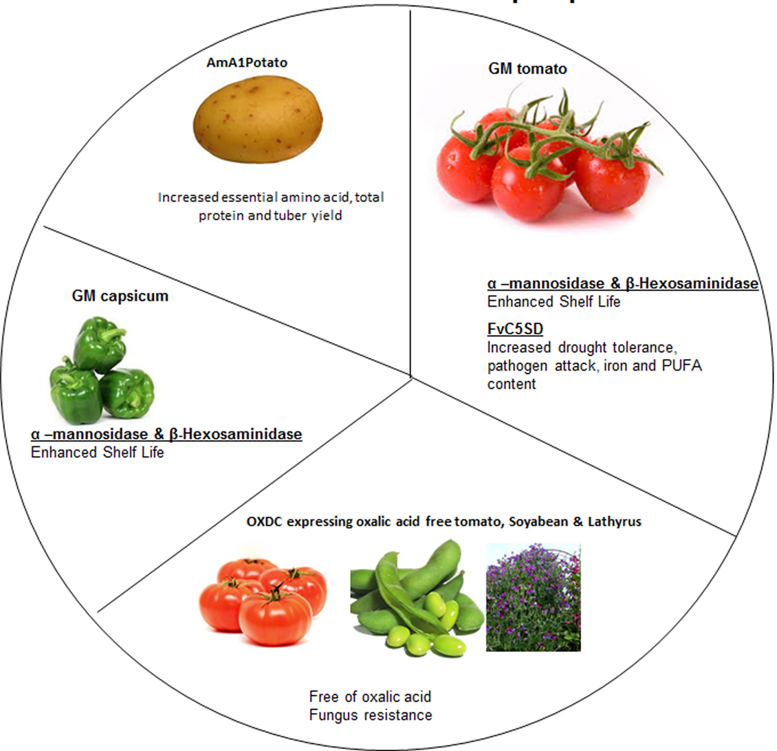 the improvement of plants through genetics Genetics and genetic improvement of drought  ferent organisms to crop plants through a targeted  a review on genetics of drought resistance and different.