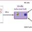 Arabinoxylan rice bran (Biobran) for the treatment of Hepatitis C