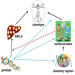 Relationship between genetype, phenothype and diet in the NAFLD context