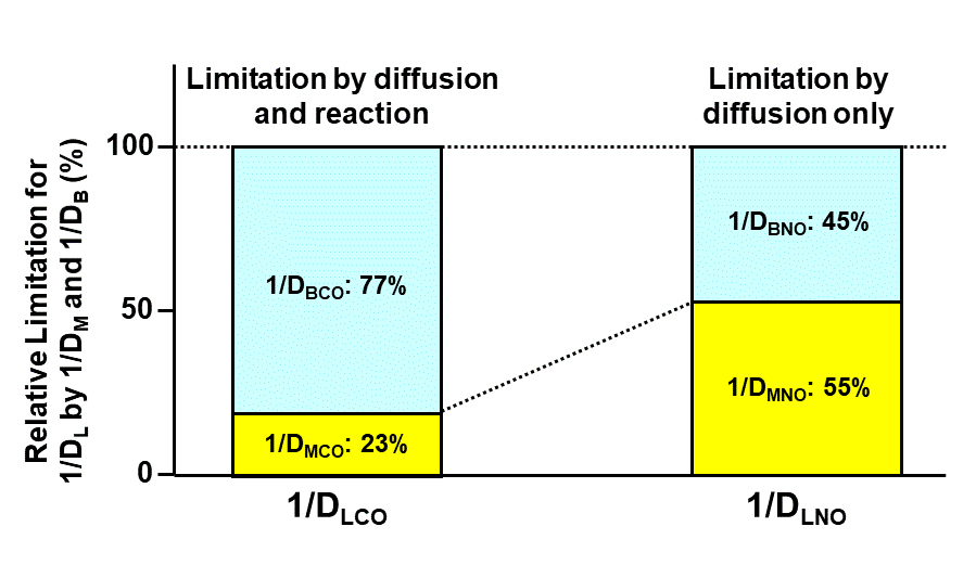 Relative contribution of 1/DM and 1/DB to overall resistance of 1/DL
