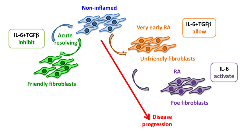 The changing roles of fibroblasts