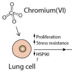 How does chromium cause lung cancer