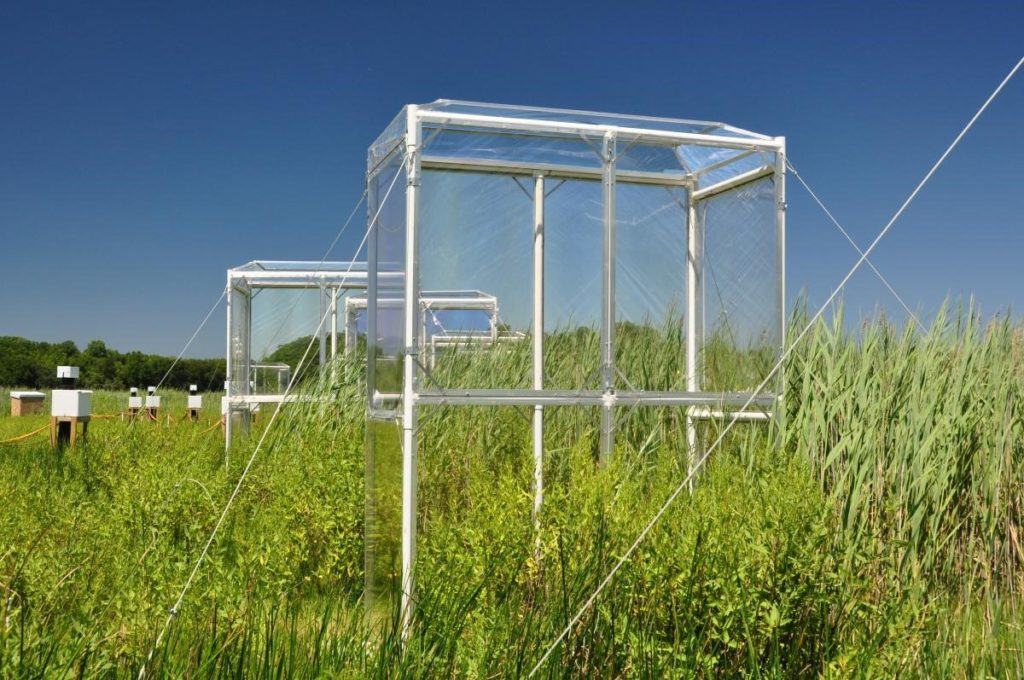 Elevated carbon dioxide chambers at the Global Change Research Wetland