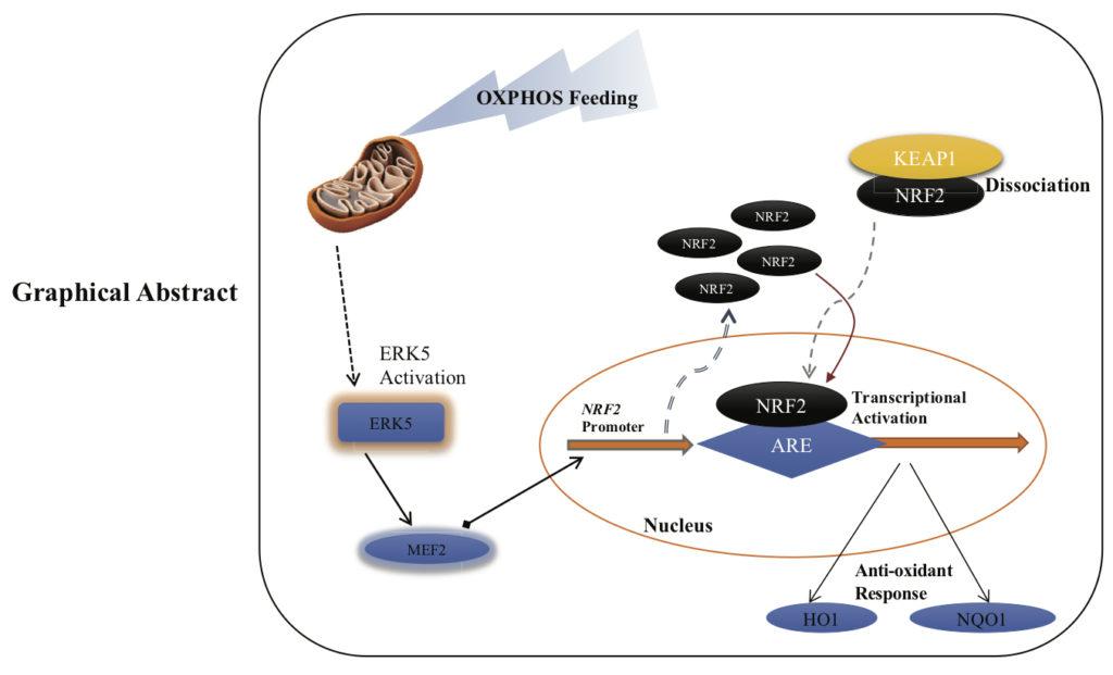 Mitochondrial Complex I activity signal