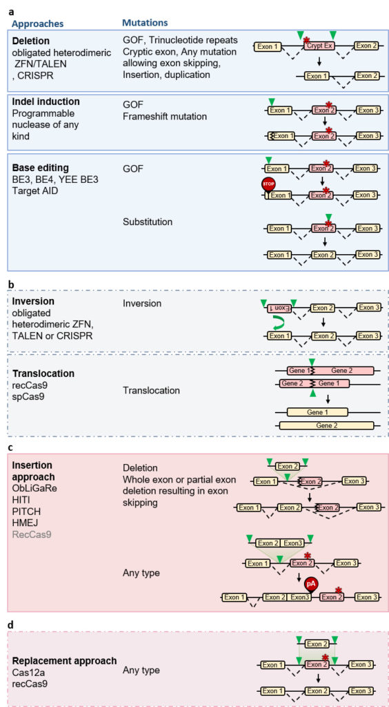 Candidate gene editing approaches for non-dividing cells in vivo