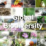 Rethinking How We Pay for Conserving Global Biodiversity