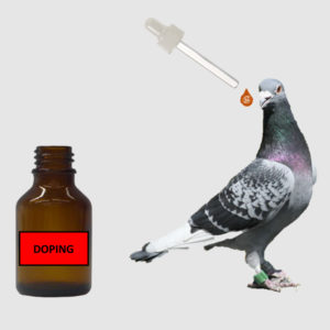 Control of doping in racing pigeons