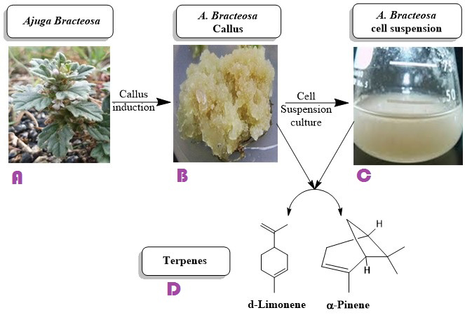 Strategies to enhance antioxidant potential and biosynthesis