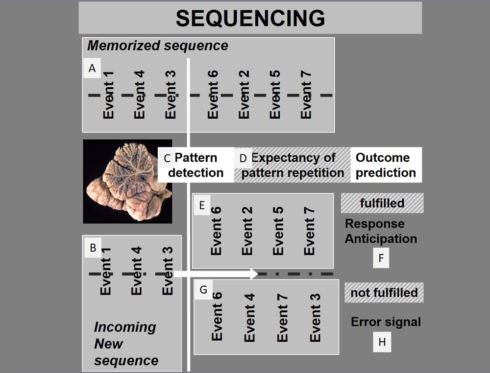Proposed mechanism of cerebellar sequencing for prediction