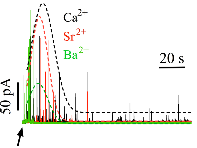 Secretory responses induced by divalent cations in permeabilized chromaffin cells