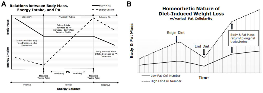 'Fundamental Questions of Obesity