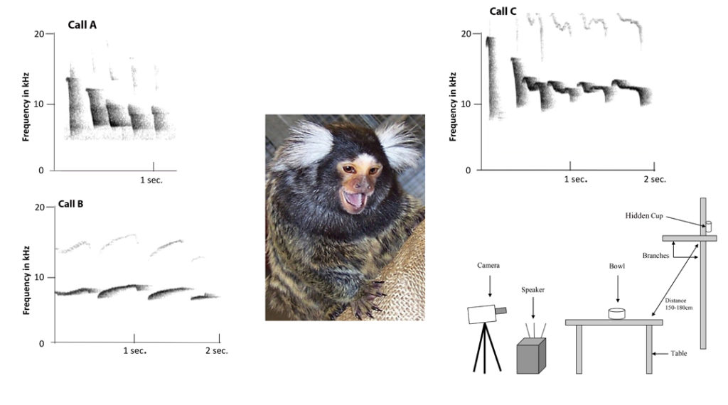 Marmosets know the meaning of a food call. Atlas of Science