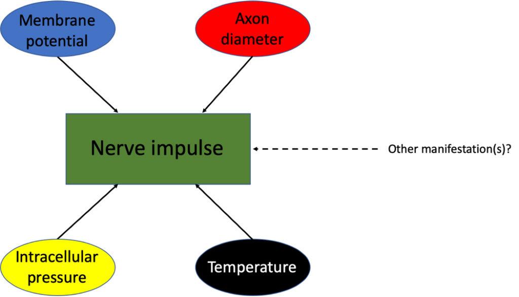 propagating nerve impulse. Atlas of Science