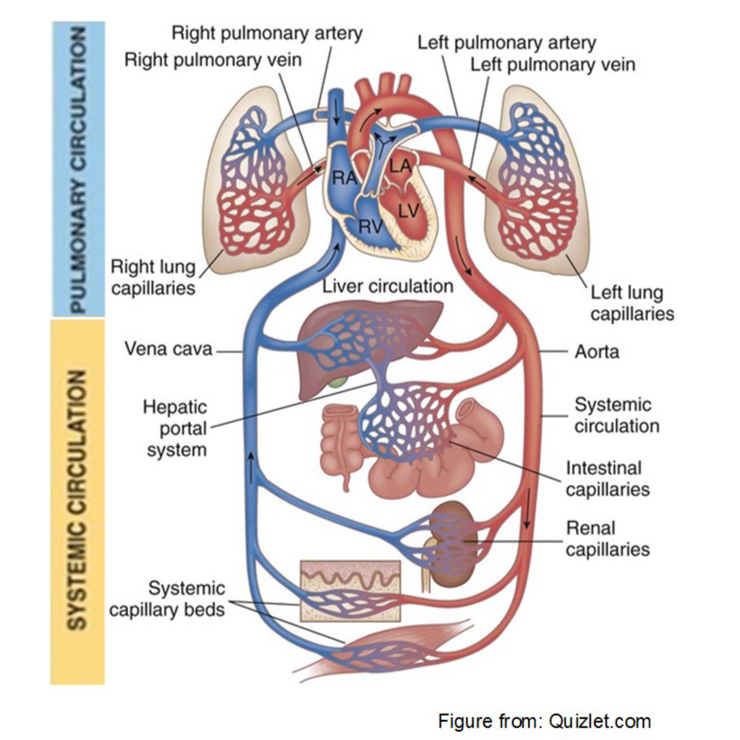 Intestinal inflammation impact the lung response to bacterial endotoxin. Atlas of Science