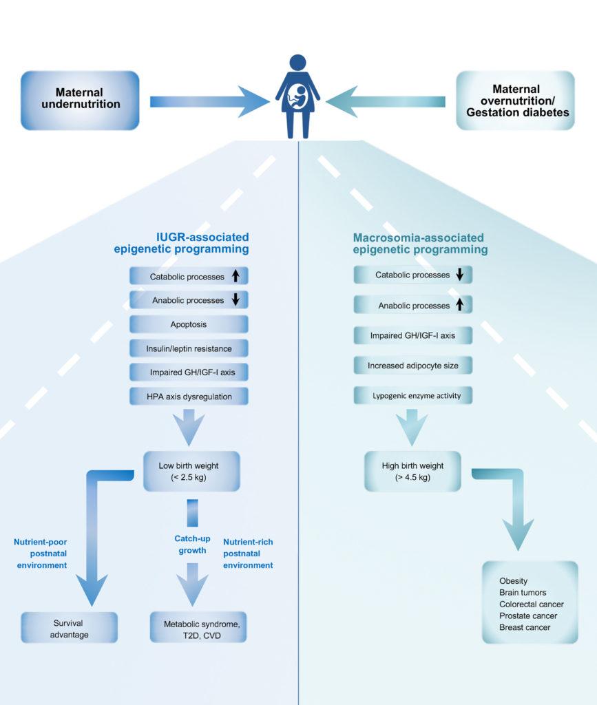 Developmental origins of aging trajectory