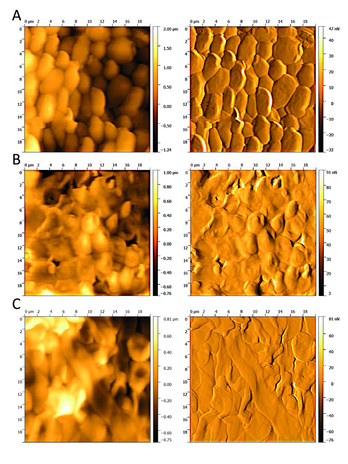 Atomic-force microscopy images of the plasma-treated biofilms. Atlas of Science