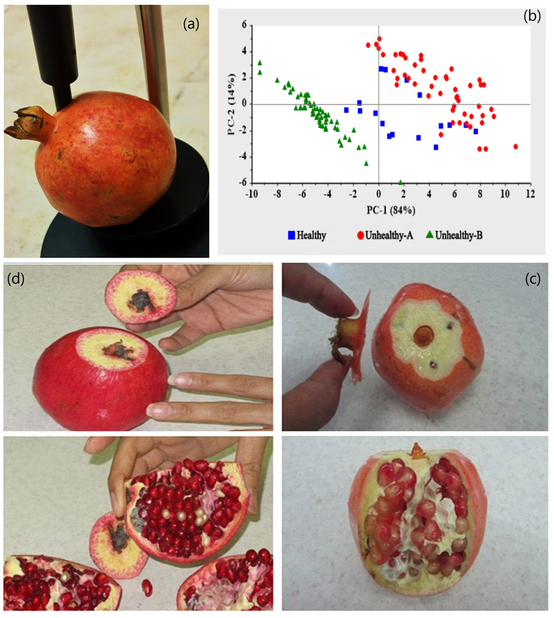 Vis/NIR spectroscopy of pomegranate fruit at the position around and near the calyx. Atlas of Science