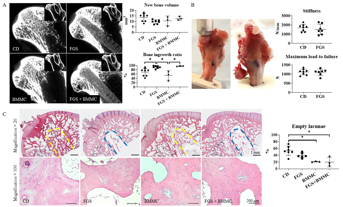 A functionally-graded scaffold and bone marrow-derived. Atlas of Science