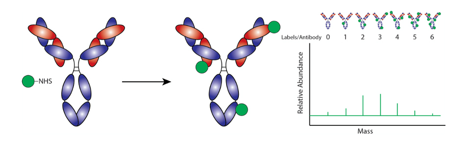 Atlas of Science. Traditional Antibody Labeling Methods.