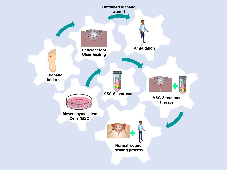 Atlas of Science. The Roles of Mesenchymal Stem Cells Secretome