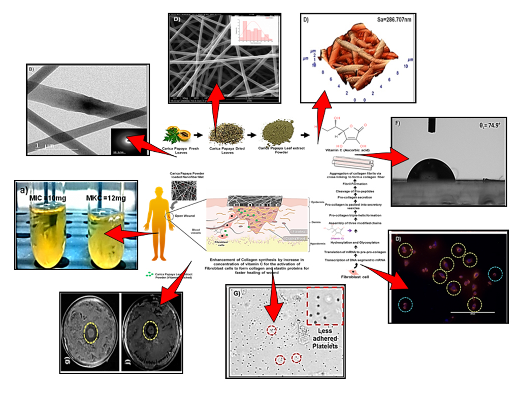 Atlas of Science. Carica papaya loaded PVA-Gelatin nanofibrous scaffold: a wound dressing material