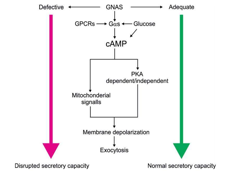 Atlas of Science. Novel genetics approach identifies GNAS gene.