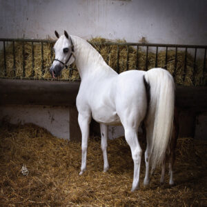 """Atlas of Science. Is the ACTN3 gene a real """"speed gene"""" in horses"""