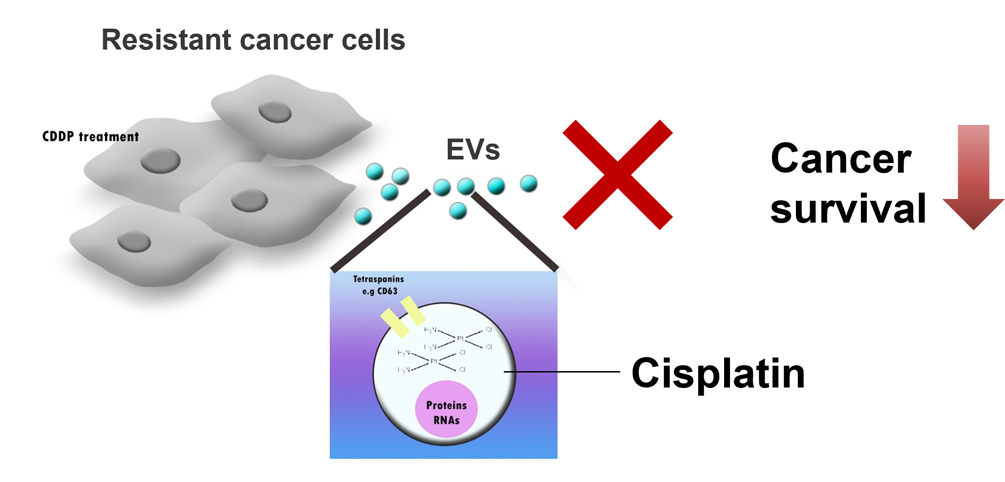 Atlas of Science. Eavesdropping on cell communications to treat cancer with drug resistance.