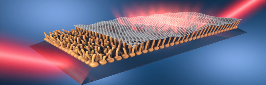 Crowd surfing of graphene on a lipid monolayer